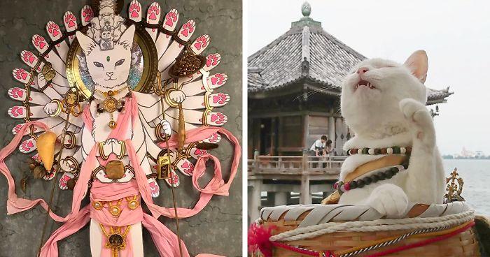 ''Lo sapevi che....'' : Nyan Nyan Ji, il santuario giapponese dove i monaci sono gatti